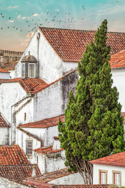 Photograph - Birds Over Obidos by David Letts