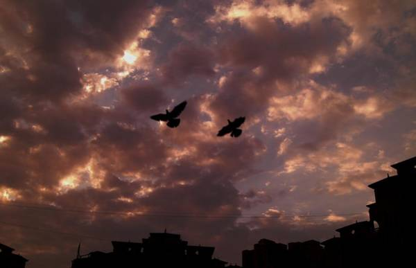 Wall Art - Photograph - Birds Over The Sky by I M Swaminathan