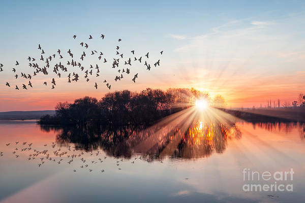Wall Art - Photograph - Birds Silhouettes Flying Above The Lake by Muratart