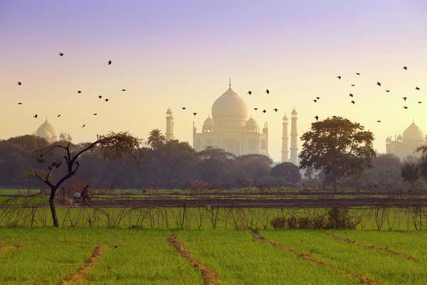 Animal Place Wall Art - Photograph - Birds Take Flight Near Taj Mahal by Adrian Pope