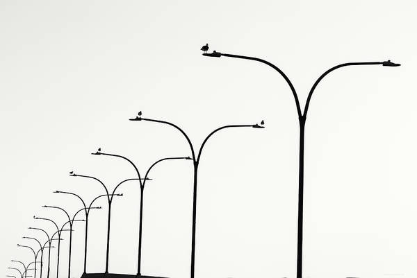 Photograph - Birds Watch Over Queensway Bridge by Denise Dube