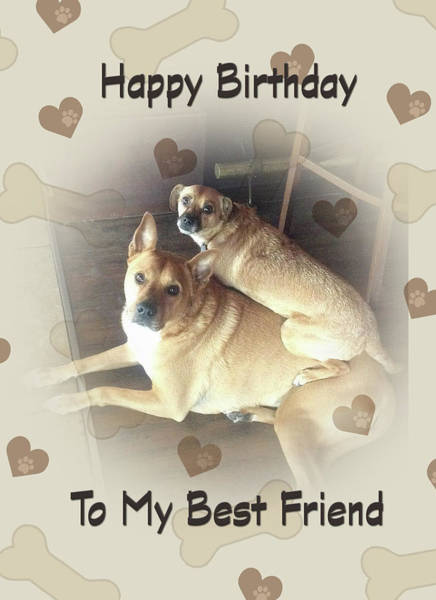Digital Art - Birthday For Friend With Two Mixed Breed Dogs by Jacqueline Sleter