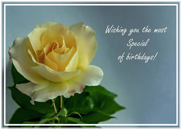 Photograph - Birthday Rose by Cathy Kovarik