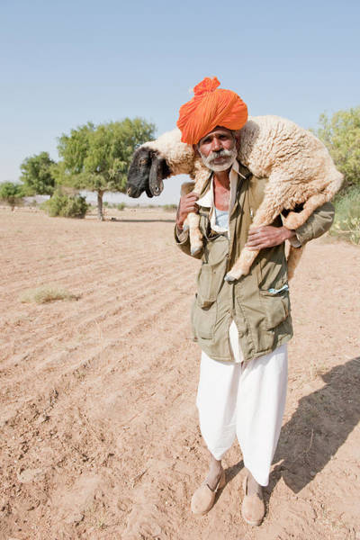 Indigenous People Photograph - Bishnoi Shepherd Carrying Sheep, Thar by Mike Powles