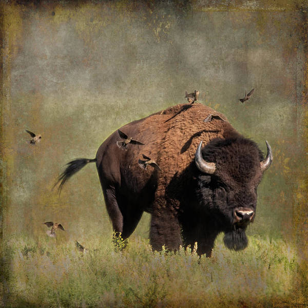 Photograph - Bison And Friends by Mary Hone