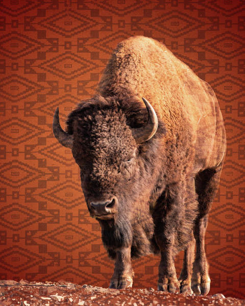Bison Blanket Art Print