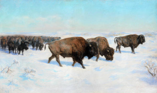 Wall Art - Painting - Bison In The Snow by Rosa Bonheur