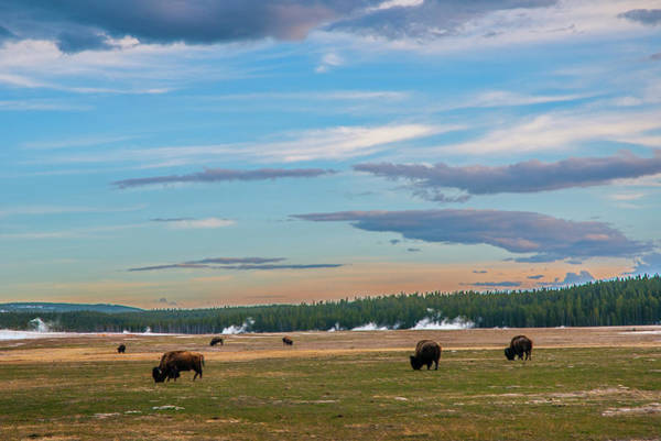 Photograph - Bison On The Range by Matthew Irvin