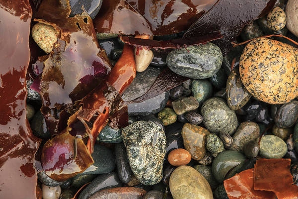 Wall Art - Photograph - Bits Of Seaweed And Rocks On The Beach by Stuart Westmorland