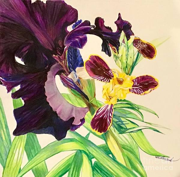 Drawing - Black And Bumblebee Iris by Laurel Adams