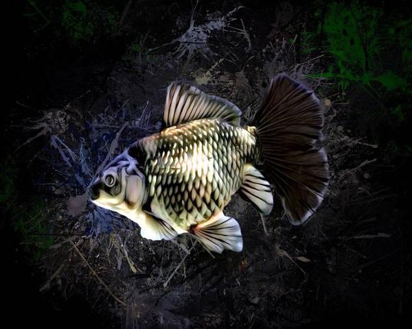 Digital Art - Black And Gold Bristol Goldfish  by Scott Wallace Digital Designs
