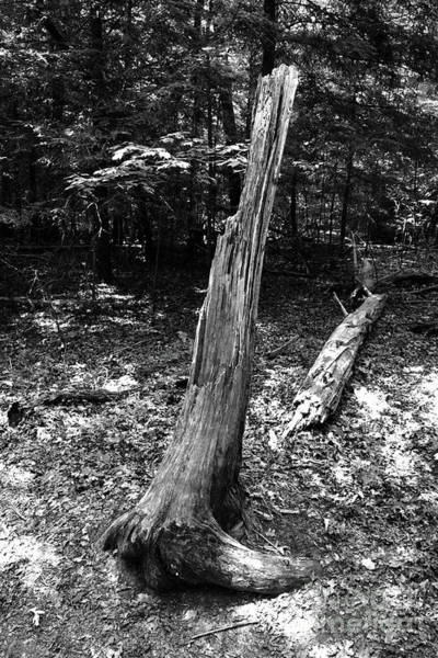 Photograph - Black And White Fallen Tree by Phil Perkins