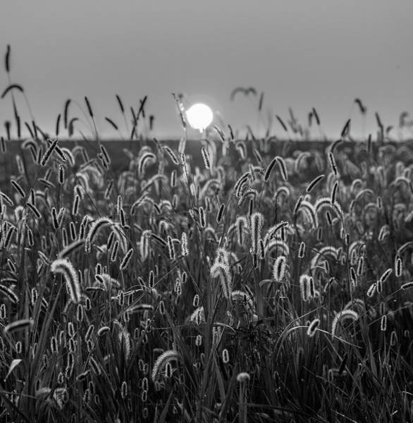 Photograph - Black And White Field At Sunrise by Dan Sproul