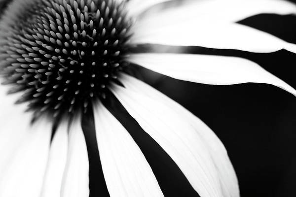 Black And White Flower Maco Art Print