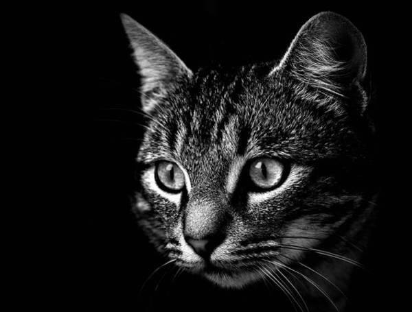 Photograph - Black And White Image Of Cat by Eduardo Estéllez