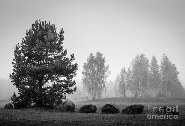 Colorado Wall Art - Photograph - Black And White Landscape With Stones by Sinelev
