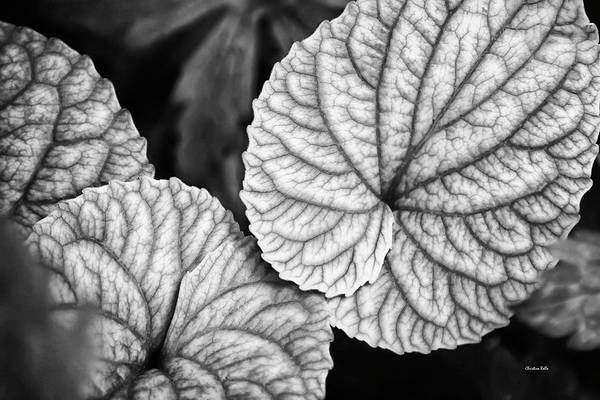 Wall Art - Photograph - Black And White Leaves Abstract by Christina Rollo