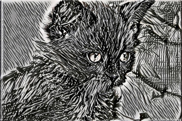 Digital Art - Black And White Line Art Kitty by Don Northup