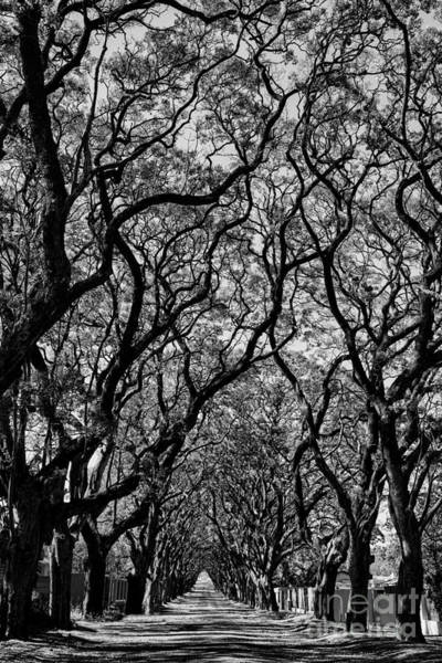 Wall Art - Photograph - Black And White Of Lane With Trees by Dina Van Wyk