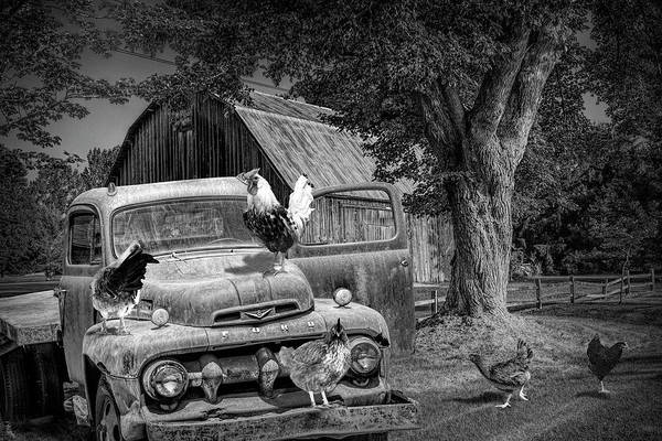 Photograph - Black And White Of Old Vintage Ford Truck With Chickens by Randall Nyhof