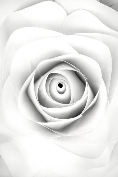 Photograph - Black And White Paper Rose by Don Johnson