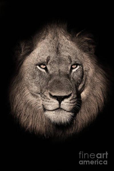 Wall Art - Photograph - Black And White Portrait Of Lion by Rudi Hulshof