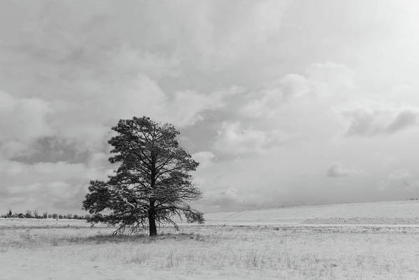 Photograph - Black And White Solitary Tree After A Snow Storm by Cascade Colors