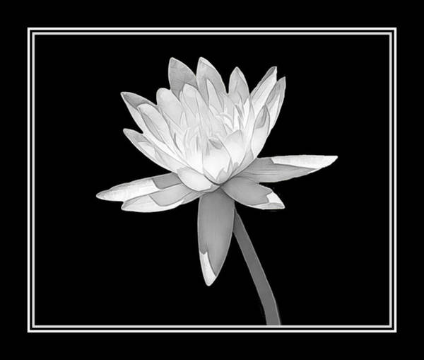 Photograph - Black And White Water Lily by Rosalie Scanlon