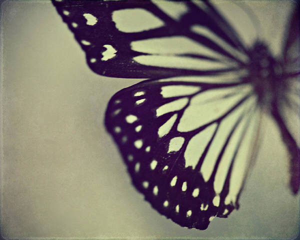 Butterfly Wall Art - Photograph - Black And White Wings by Amelia Kay Photography