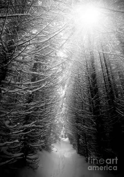 Wall Art - Photograph - Black And White Winter Forest, Vertical by Ssokolov
