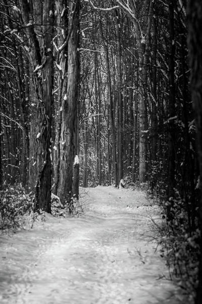 Photograph - Black And White Winter Walk by Dan Sproul