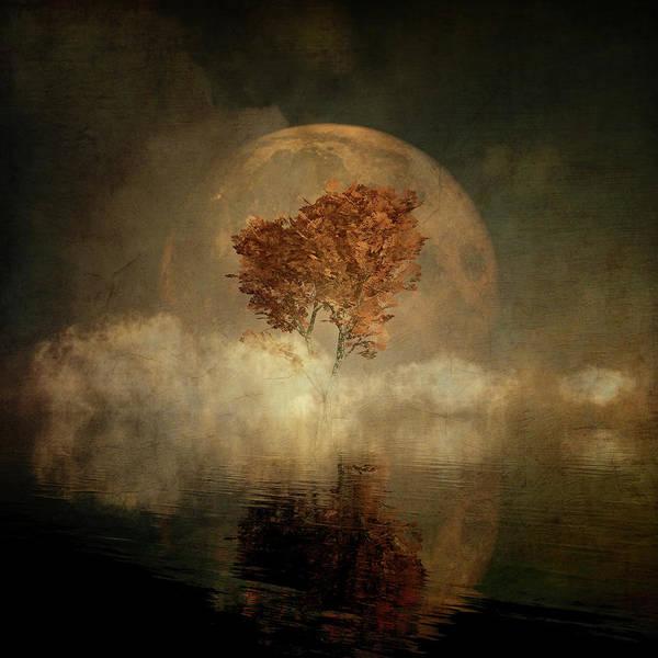 Digital Art - Black Ash With Full Moon by Jan Keteleer