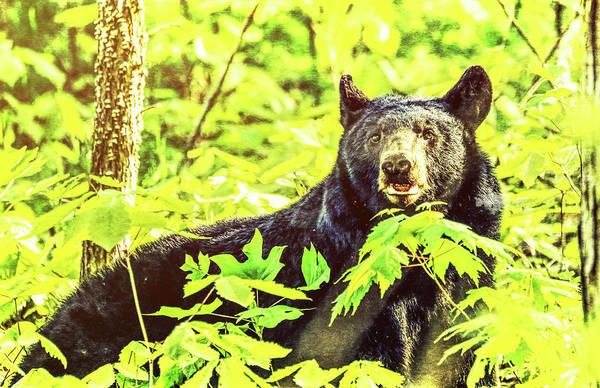 Photograph - Black Bear Grunge by Dan Sproul