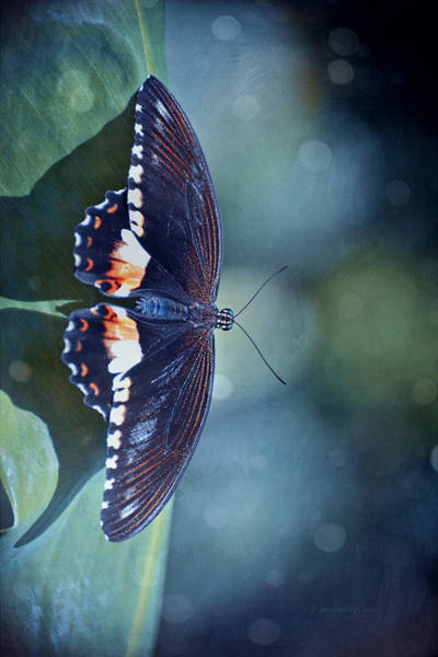 Wall Art - Photograph - Black Butterfly by Maria Angelica Maira