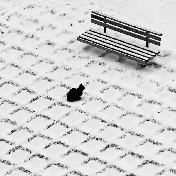 Domestic Animals Photograph - Black Cat Contemplating Bench by Photo By Marianna Armata