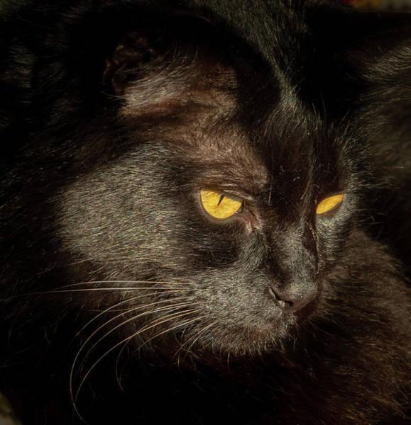 Photograph - Black Cat by Jean Noren