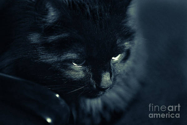 Look Away Photograph - Black Cat Looking Away by David Bruffy