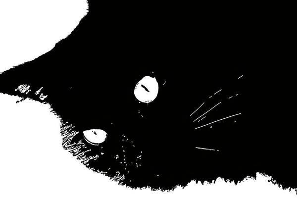 Digital Art - Black Cat Minimal Sketch by Don Northup