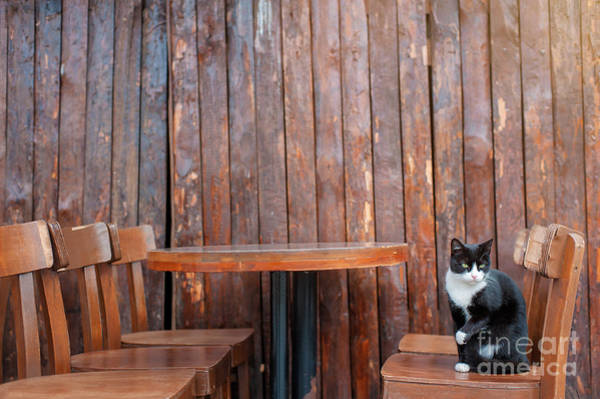Wall Art - Photograph - Black Cat Sitting On Chair In Outdoor by Kudla