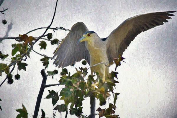 Wildlife Refuge Digital Art - Black Crowned Night Heron 1 Abstract Impression by Linda Brody