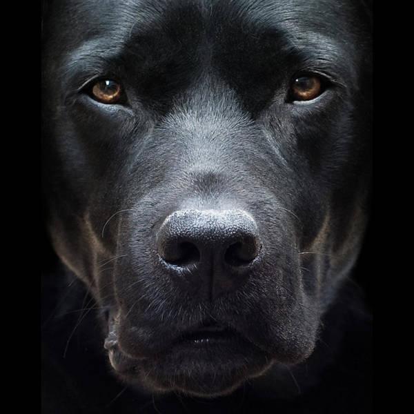 Photograph - Black Dog by Jody Trappe Photography