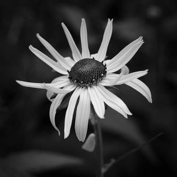 Photograph - Black Eye by Patrick M Lynch