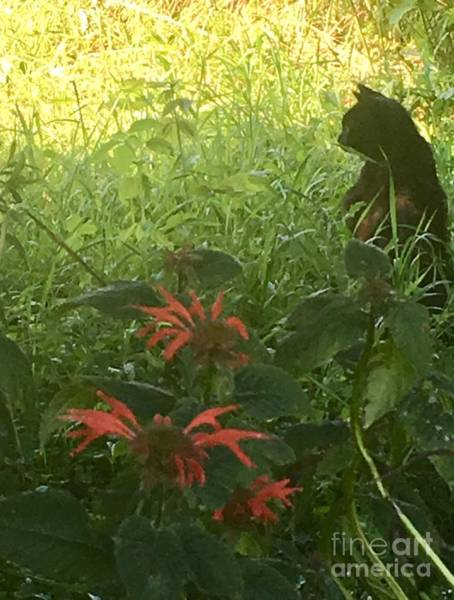 Wall Art - Photograph - Black Farm Cat In The Wildflowers by Jeffrey Koss