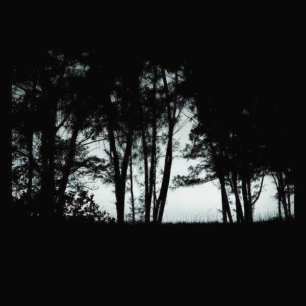 Photograph - Black Forest by Robert Stanhope