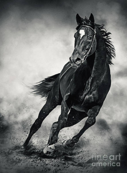 Photograph - Black Horse Running Wild Black And White by Dimitar Hristov