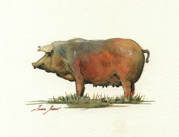 Pig Painting - Black Iberian Pig by Juan Bosco