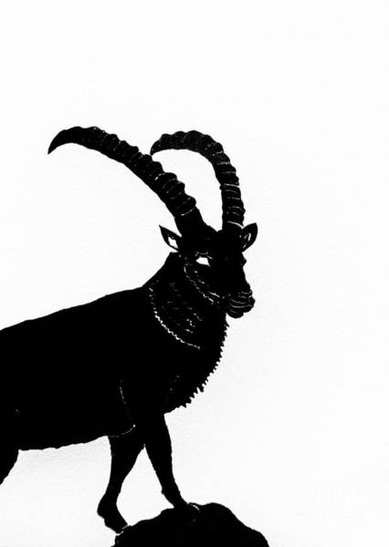 Ibex Wall Art - Photograph - Black Ibex by DiFigiano Photography