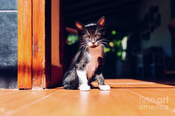 Photograph - Black Kitten Resting In The Sun On The House Floor. by Joaquin Corbalan