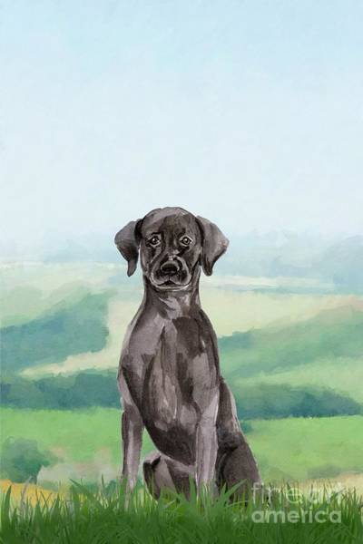 Pedigree Painting - Black Labrador by John Edwards