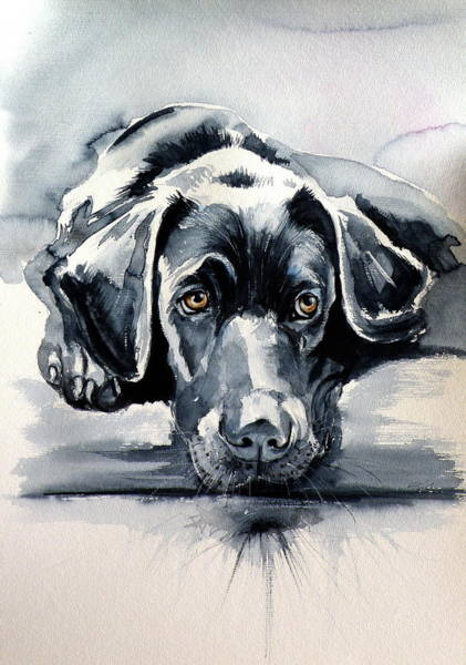 Wall Art - Painting - Black Labrador by Kovacs Anna Brigitta